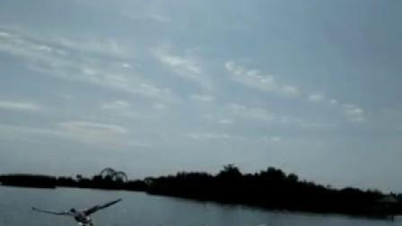 鸣翠湖上携鸟同行