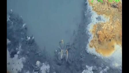 """生物进入必死无疑的墨西哥湾海底""""死亡之池"""""""