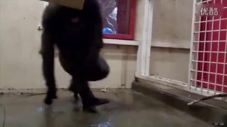 谁合并的动物搞笑视频神奇动物在那里