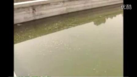 淡水小龙虾的养殖技术(龙虾养殖重要视频)(四)