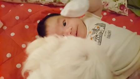 【陶德生活記錄】狗狗與孩子的寶貝時光