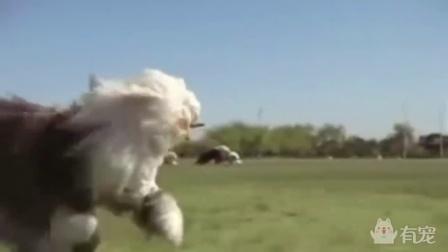 油漆广告里的狗,很多人知道却没看过