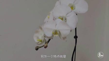 从WildChina到碧山旅行 这个云南姑娘一游就是16年 631
