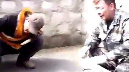 你们要的纯种狮形藏獒PK比特犬,全程咬着不松口一直碾压在身下