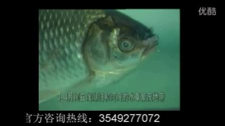 中日钓鱼岛最新消息_攟?_钓鱼渔具批发市场