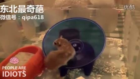 实拍:镜头下那些傻缺动物的行为,让人哭笑不