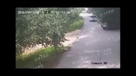 """""""八达岭老虎伤人""""完整视频首度曝光"""