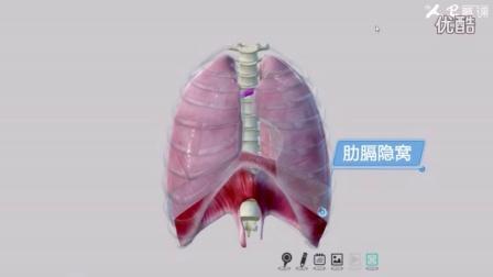 《人体系统解剖学》第4章、呼吸系统5、胸膜