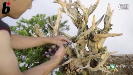 这么美的舍利是怎么雕刻出来的?柏树舍利制作视频 舍利雕刻 柏树盆景制作
