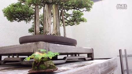 美国华盛顿州的自然盆景博物馆National Bonsai & Penjing Museum, Washington DC
