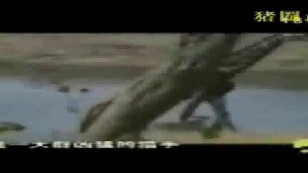 运动的旋律动物世界_长颈鹿脚踢狮子险逃生_标清lq0_动物世界瓢虫动画图片