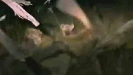 动物世界画的图片_凶残的狮子和豺狗_标清ze0_我的动物世界之鳄鱼游戏下载大全