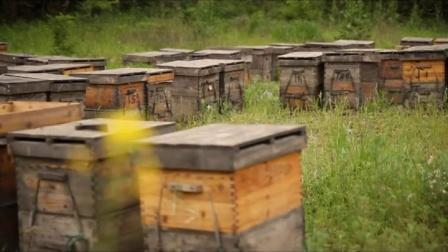颐蜂堂生态蜜蜂园有限公司