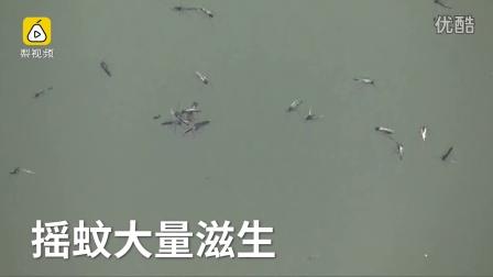 密集恐惧症慎入!武汉东湖摇蚊来袭!