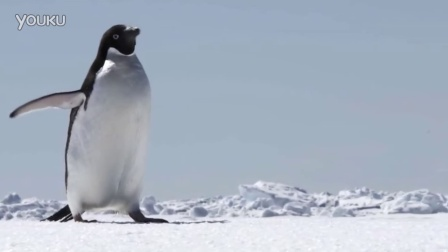 G Adventures - Antarctica with