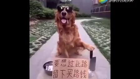 【搞笑视频】看似动物在搞笑,昭示它们心态好