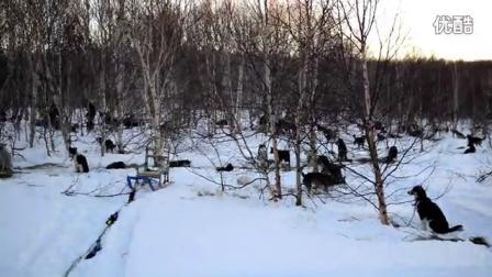 堪察加半岛狗拉雪橇大赛前夕的树林
