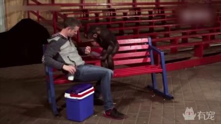 魔术师用iPad给猩猩变魔术,给它乐坏了