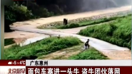 广东惠州:面包车塞进一头牛  盗牛团伙落网 北京您早 161209