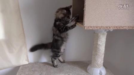 一群大猫的家里来了一只小猫,结果大猫全都被骚扰得无奈了