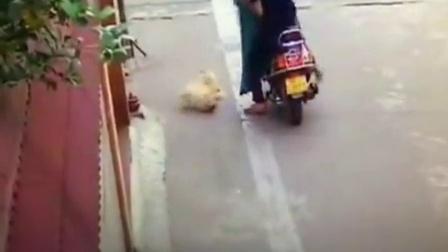 监控实拍视频 此人如此偷狗 太吓人了