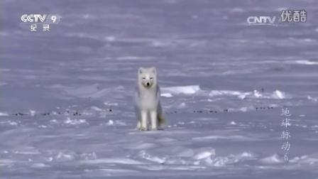 地球脉动 第六集 冰封世界
