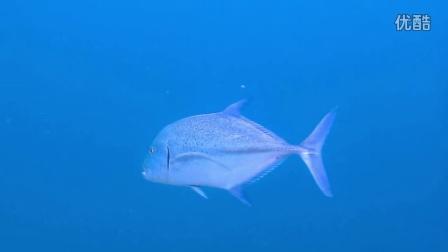 一流的潜水Puerto Galera菲律宾