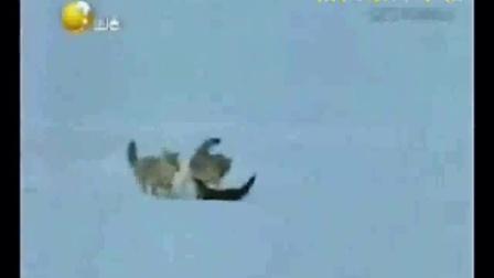 动物世界片头视频下载_动物世界花豹捕杀_动物世界蛇全集下载
