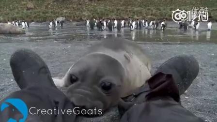 南极科考人员惨遭海豹袭击,情况极其危险!场面快要控制不住了……