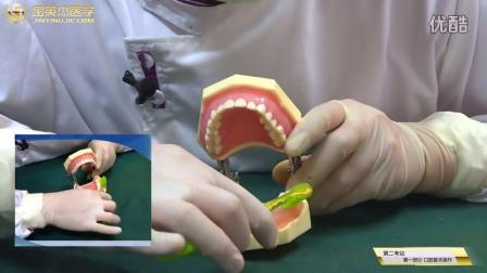 实操-改良BASS刷牙法