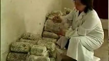 创业 故事食用菌加工与贮藏 平菇工厂化立体高产培养栽培种植技术