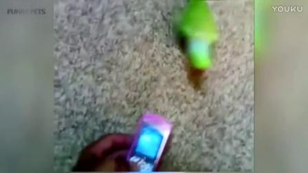 搞笑鸟儿视频集锦