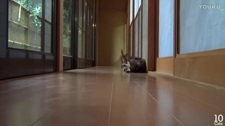 一枚可爱小猫到了一群大猫家里之后