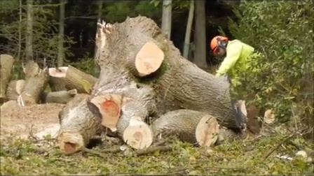 Log pile ready to split for firewood