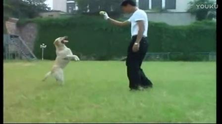 怎么训狗狗握手-狗狗名字大全