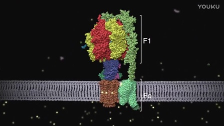 ATP synthase_ Structure and Function