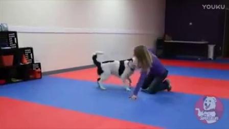 国外女主人和宠物狗玩的是如此的嗨!