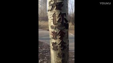 公园里面的不文明行为,名字都深深的刻在树上了,大家看像什么,,,