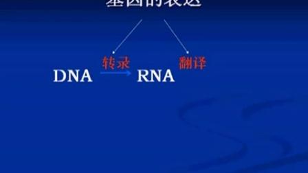 高三生物-课堂实录09 遗传的物质基础及基因工程