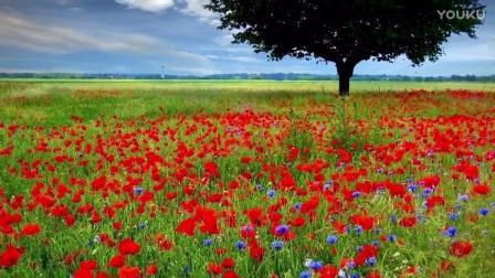 In Flanders field by Helen Gardner (Read by Jason)