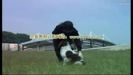 泰迪训狗教程视频-如何训练沙皮犬大小便