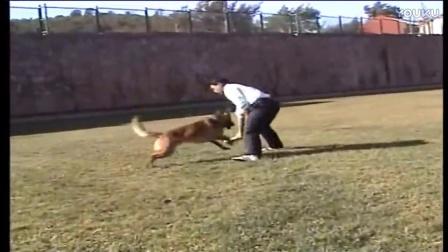 狗狗智商排名榜-请教怎么训练小狗啊