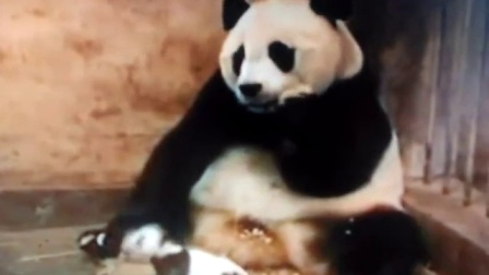 熊猫被吓坏了