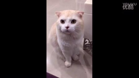 女主人拍猫咪,猫咪一脸懵逼@臭咪粉丝专页臭咪日常生活