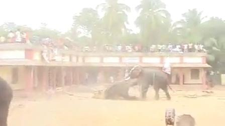 印度马戏团大象人