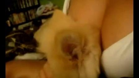 霸占mm胸部的小色狗 - 视频 - 在线观看 - 动物奇趣 - 品善网