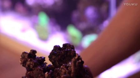 Reefyz海友志-海水缸进驻生物
