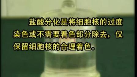 组织学制片技术(石蜡切片HE染色细胞培养)37m