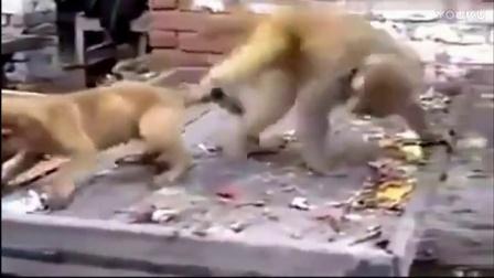 都说是猴子贱,我一开始还不信