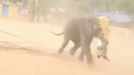 恐怖!印度婚礼上大象突然发狂杀死骑象人
